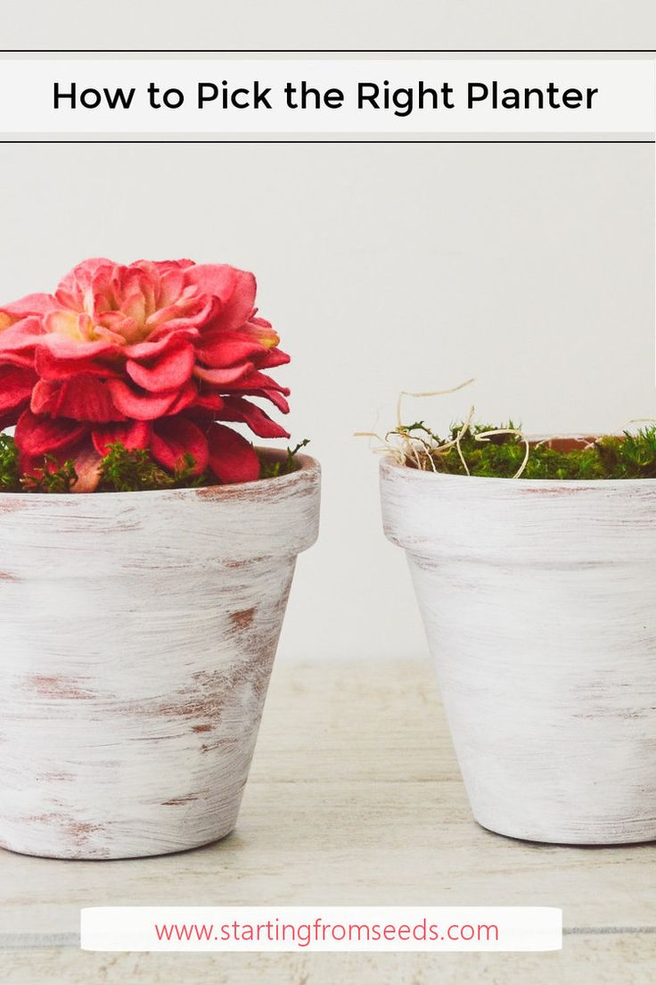 How to Pick A Planter for Indoor Plants