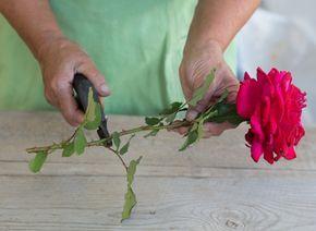 КАК ВЫРАСТИТЬ РОЗУ ИЗ БУКЕТА Вам подарили букет роз. К сожалению, в вазе их век не долог, но пока они не совсем завяли, летом можно попробовать вырастить такие розы из черенков, чтобы к осени посадить их в саду. Они будут радовать вас своим цветением каждое лето, напоминая о приятном событии.