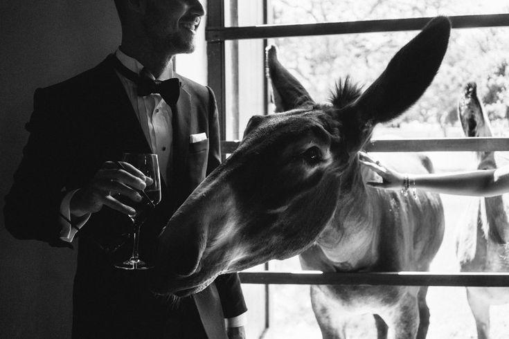Farm Inspired Wedding Venue  Babylonstoren Franschhoek
