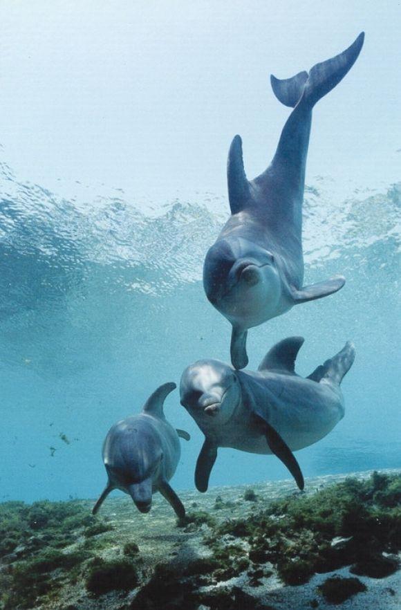 ¡Reunión De Delfines!