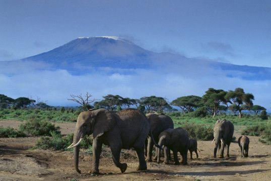 Urlaub in Kenia mit Safari