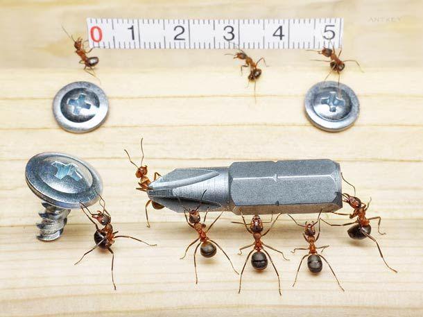 Inspirational La vie secr tes des fourmis u nouvelles photographies incroyables d uAndrey Pavlov