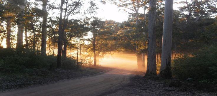 Marima Cottages - Old Vasse Road early morning