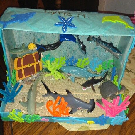 Lyric's Shark Diorama - 2nd grade animal habitat project. Love the finished product