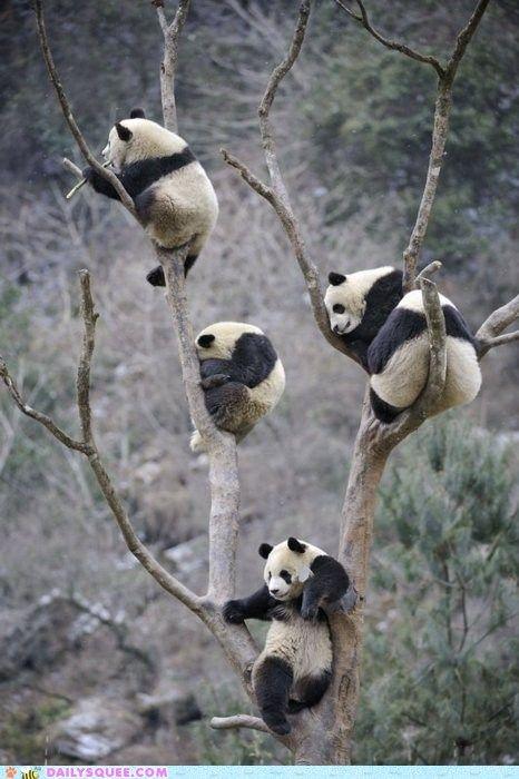 Oh. My. God. Panda Tree.