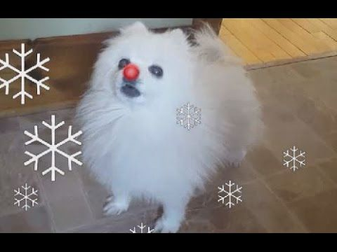 Gabe the Dog Barks a Festive Cover of 'Rudolph the Red Nosed Reindeer'
