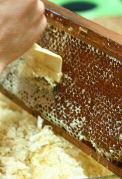 11 Must-Have Beekeeping Supplies for Beginners