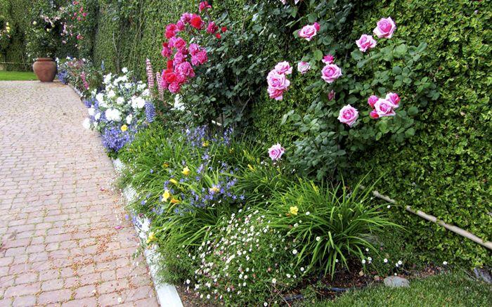 Italgarden Design servizi di manutenzione giardini Roma Albano Laziale
