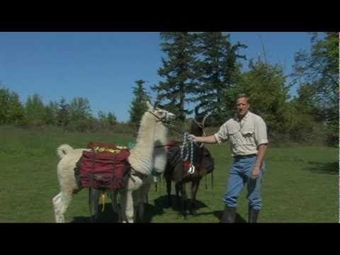 Training Pack Llamas