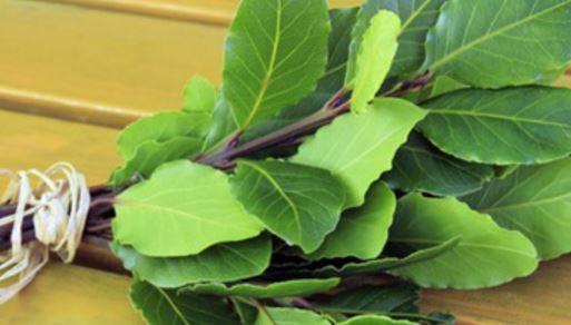 Cette plante guérit les  varices, les douleurs articulaires les maux de tête  et sauve la mémoire !