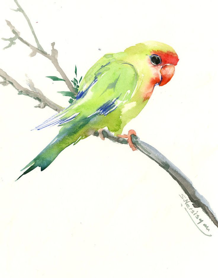 Lovebird, bird artwork, soft green red minimalist bird painting, one of a kind art by ORIGINALONLY on Etsy