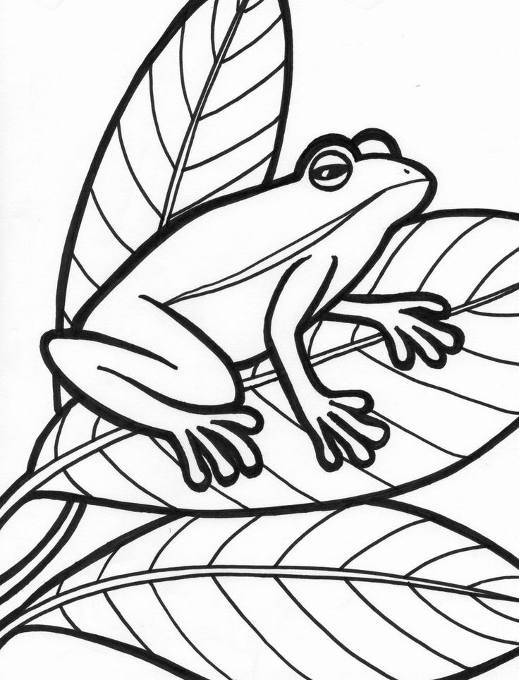 Frog Coloring Pages for Preschoolers New Coloring Arts