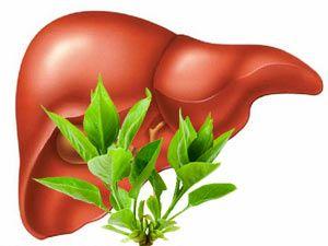 Liver 3d diagram residential electrical symbols 80 best liver images on pinterest anatomy anatomy models and rh pinterest com gallbladder diagram liver in body diagram ccuart Gallery