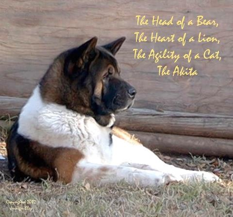 The Head Of A Bear, The Heart Of A Lion, The Agility Of A Cat
