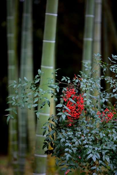 Bamboo forest  JAPAN                                                                                                                                                                                 もっと見る
