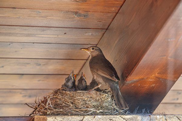 How To Keep Birds From Nesting On Porches Animals