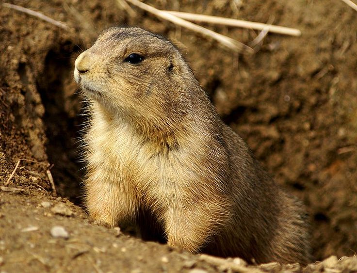 Denounce Politically Motivated Prairie Dog Hunt With Donald Trump Jr.