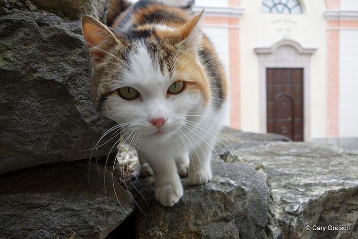 Chat à Caviano (11/25) (2013-04-01 -28)