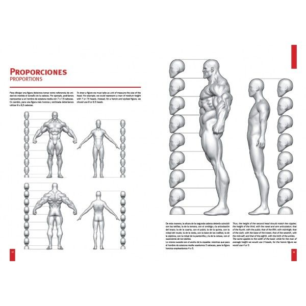 15 best Martin canale images on Pinterest   Referencia de anatomía ...