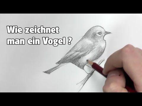 Vogel zeichnen für Anfänger - einfach | Tiere zeichnen mit ...