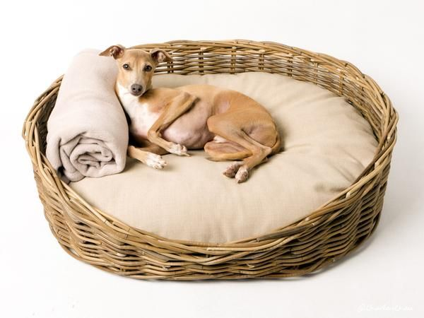 A beautiful wicker dog bed set - stunning handwoven grey rattan dog basket & luxury mattress with versatile reversible cover. Waterproof option also available.