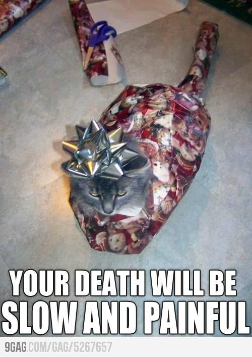 I want to see what happens when they unwrap him - arme Katze!