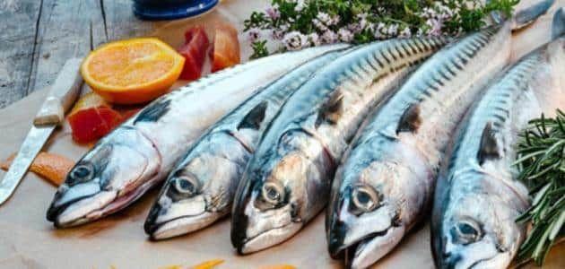ما هي فوائد وأضرار سمك الماكريل Fish Mackerel Meat