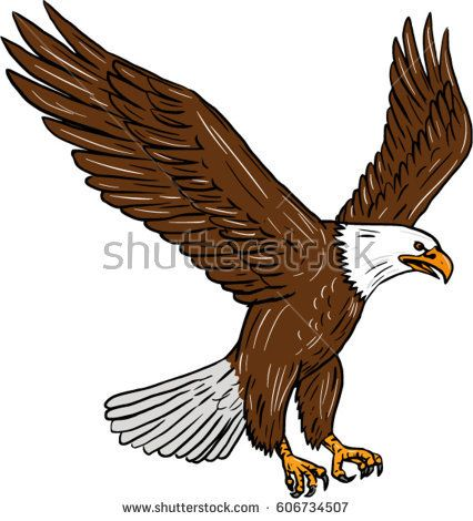 Drawing sketch style illustration of bald eagle flying wings flapping viewed from the side set on isolated white background.   #eagle #sketch #illustration