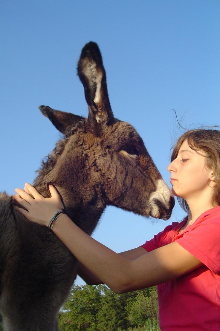 Certaines randos peuvent être accompagnées d'ânes bâtés
