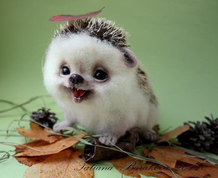 166 Best Hedgies Porcupines Images On Pinterest