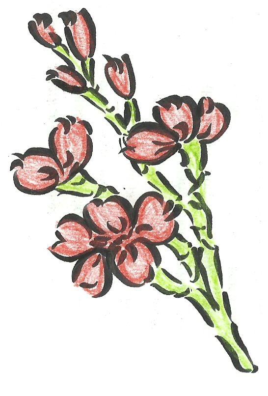 Cherry Blossoms 2 by ~nano9999 on deviantART