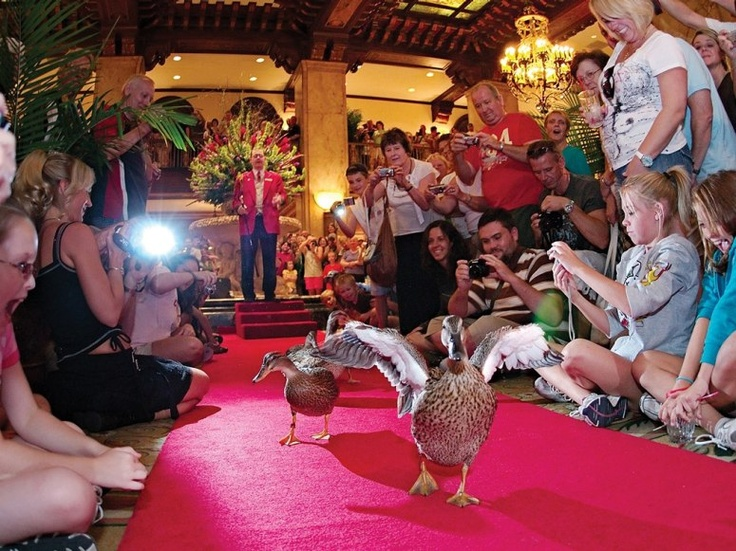 The Peabody Ducks, The Peabody Hotel, Memphis Tenn.