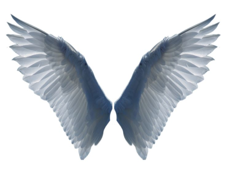 Wings 2 PNG by EveLivesey.deviantart.com on @deviantART