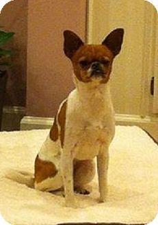 Dog Adoption Benton Arkansas