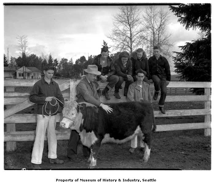 4-H Club members at cattle judging, March 1948