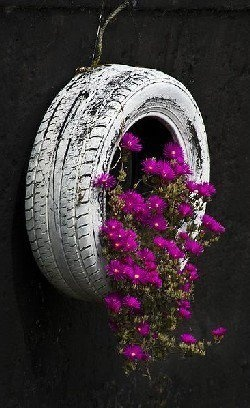 Old painted tire planter with purple flowers.