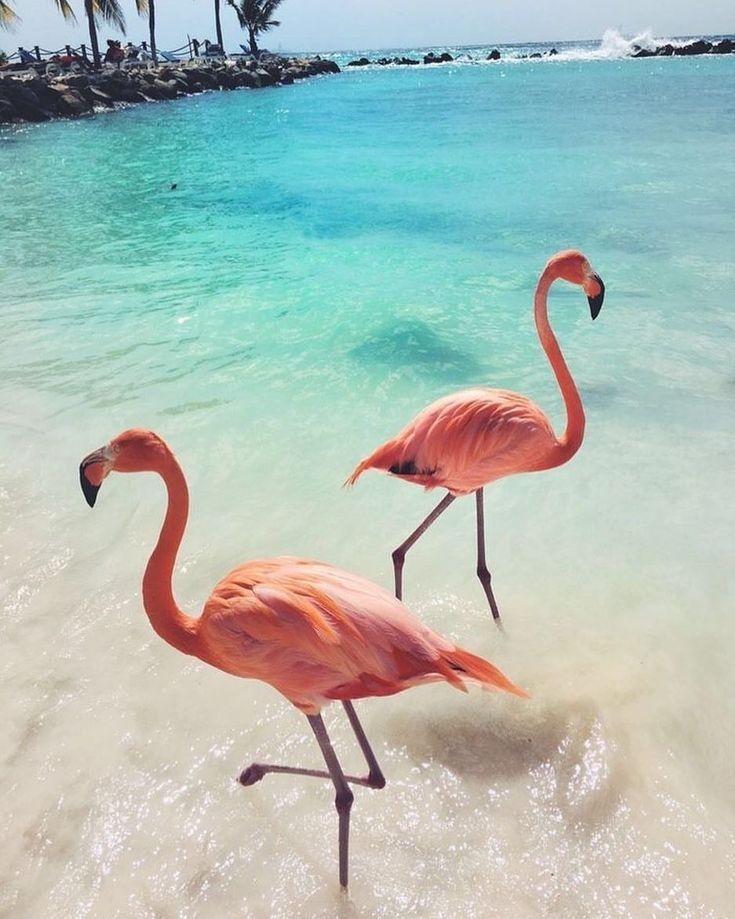 Фламинго картинки на телефон