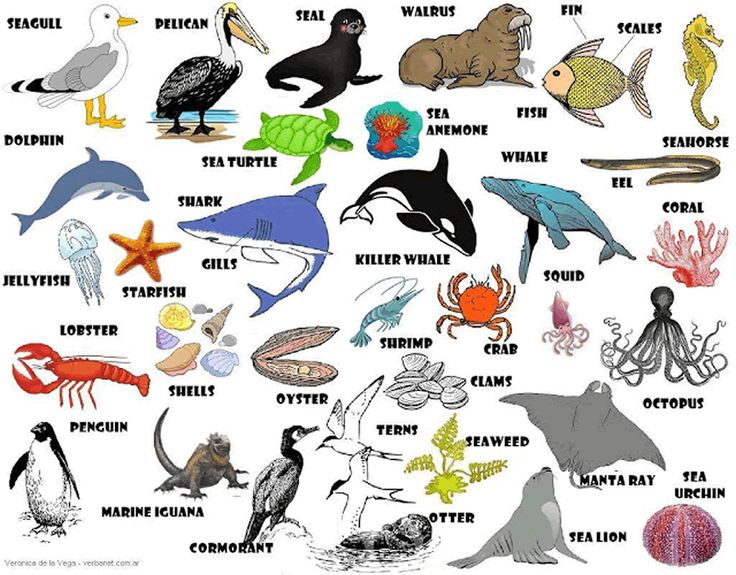 Learning the English vocabulary for sea animals English lesson