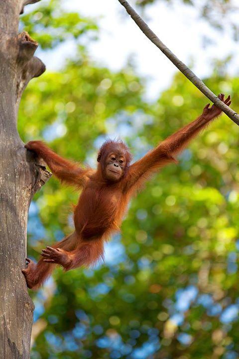 My next adventure visiting the orangutans in borneo