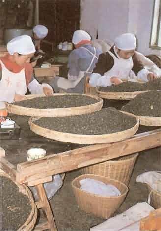 TÉ,té, Té verde, té negro,té rojo, té blanco, té amarillo,  propiedades y beneficios del té