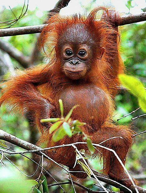 cute red monkey cub on a tree
