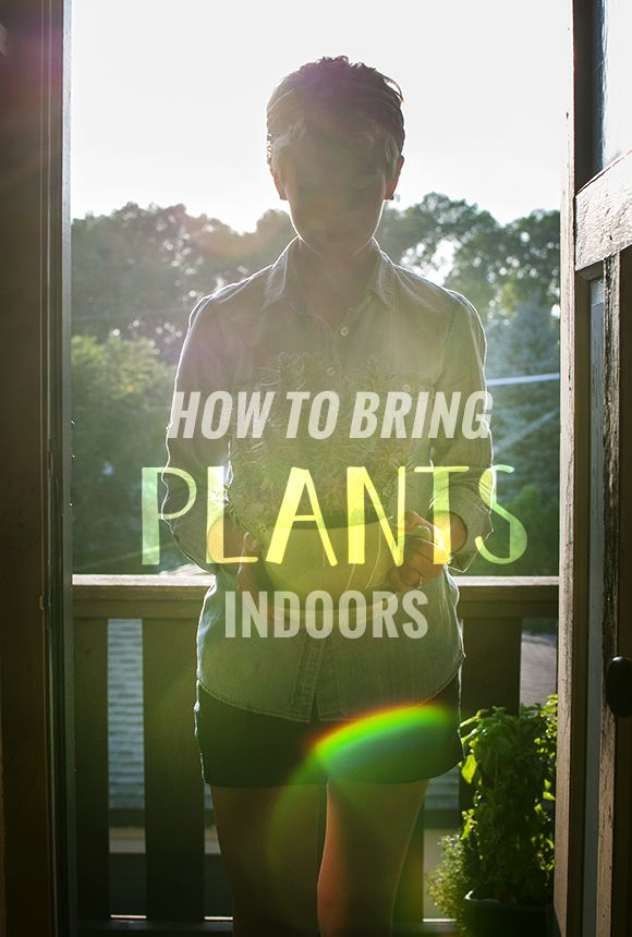 How to bring plants indoors in the fall / Inspired to Share for The Neighborhood