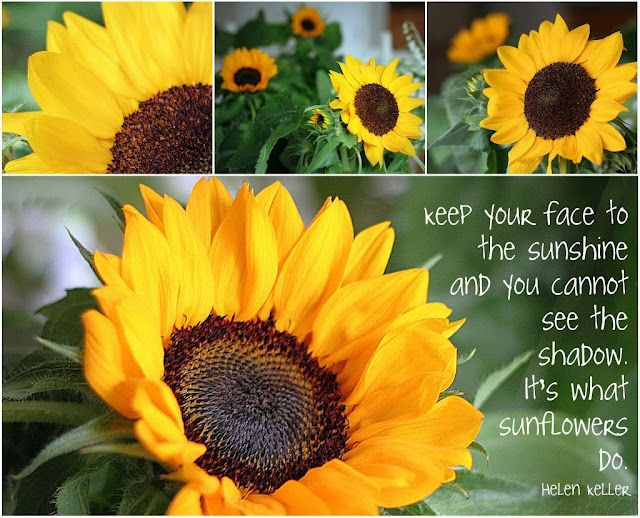 Lets try to see the light of each person and not the shadows......I love sunflowers!!!!!