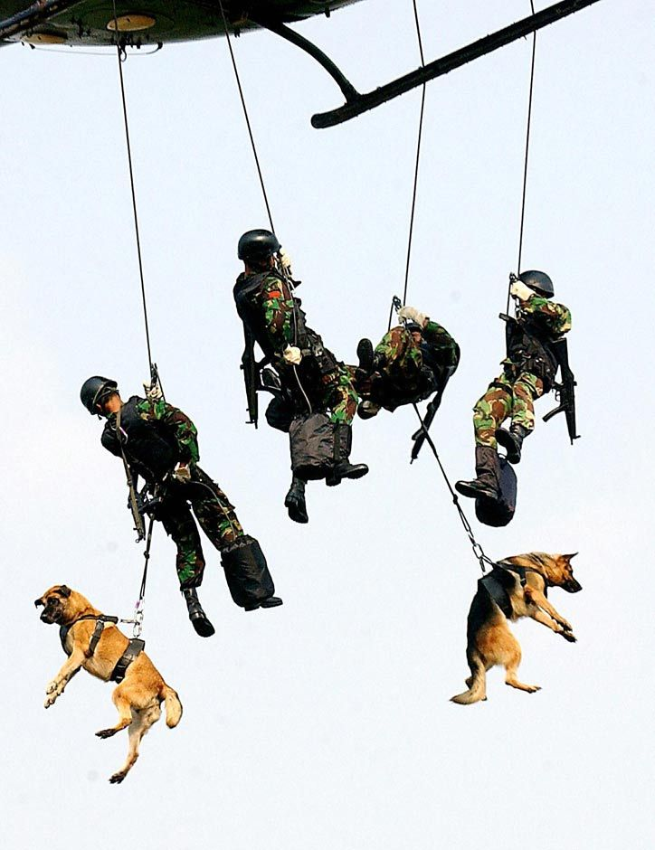 And yet the bastard government decided the 4 legged ones are equipment when they retire. This is an incredibly profound shot. The bravery of the men and their dogs in service to our country.