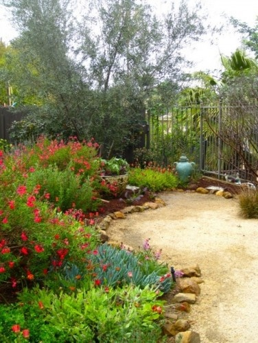 Native plants mix with Mediterranean imports in a Central California garden. Since both thrive in the same conditions, they work well together; most people would be hard pressed to know which is which. The result is an easy-care garden that's colorful without demanding too much water. The color of the decomposed granite pathway echoes the colors of the trails in the surrounding hills.