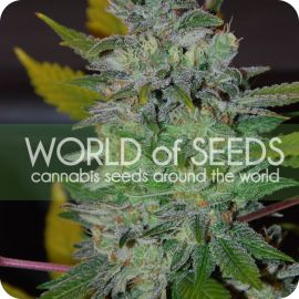 Space - strain - World of Seeds | Cannapedia