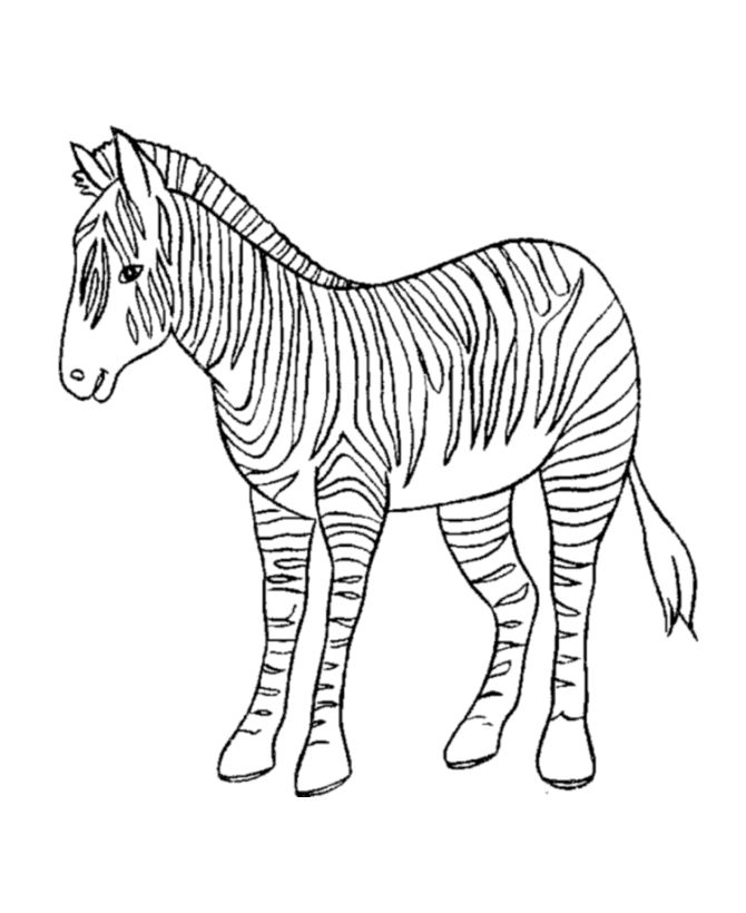 137 best images about animal coloring book on pinterest Coloring book zebra