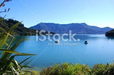 Bay on the Kenepuru Sound, Marlborough Royalty Free Stock Photo
