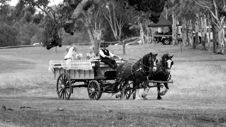 Bride arriving on Horse + Cart @ The Woolshed, Jondaryan Salt Studios| Toowoomba Wedding and Commercial Photography