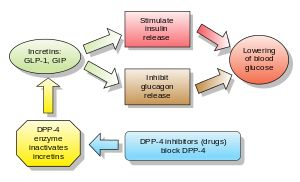 Dipeptidyl peptidase-4 inhibitor - Wikipedia, the free encyclopedia